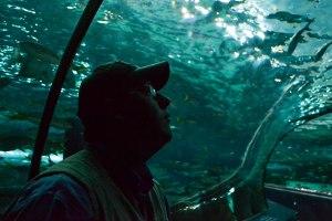 Aquarium8